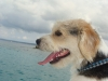 Max - dog Compass Bonaire